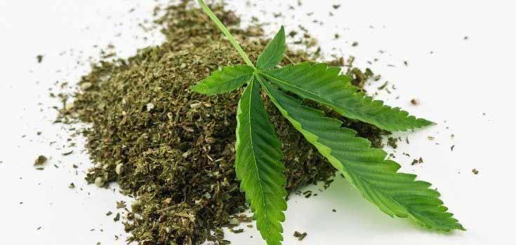 Estudios sobre el cannabis y sus compuestos