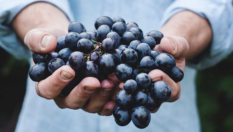 Perfil nutricional de las uvas