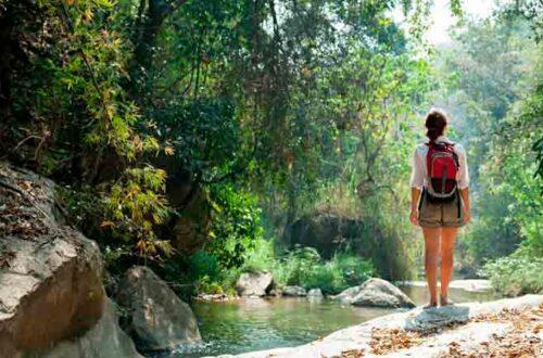 Cinco forma de curar la separación con la naturaleza