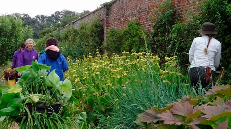 Beneficios de la Horticultura Terapéutica