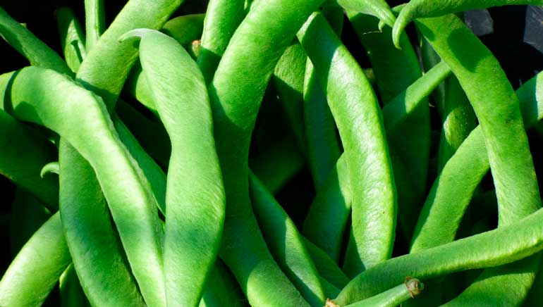 Beneficios para la salud de las judías verdes