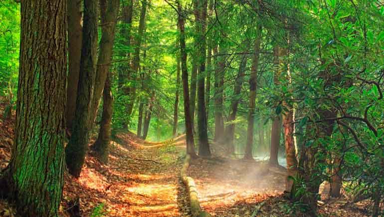 14 tipos de ecoterapia