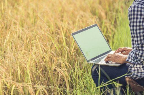 Búsquedas sobre salud en internet
